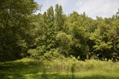TRACT 3:  39.078 ACRES - WOOD LAND ON BAKERSVILLE RD. & BAKERS LANE