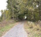 FARM 2 - TRACT 18: 1.6± Acres East of Ben Long Road. North of tract 19. Timber Tract. Good Deer & Turkey Hunting